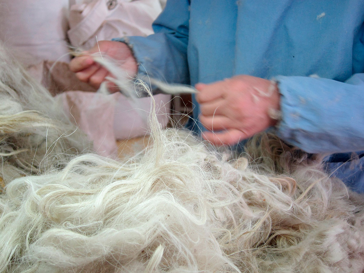 "After the fibers are collected each spring, they have to be sorted and washed to eliminate any coarse ""guard"" hairs."
